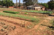 Huertas Escolares se desarrollan con éxito en Caaguazú